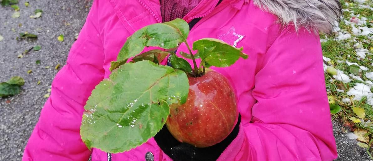 Permalink auf:Apfelernte – 2020
